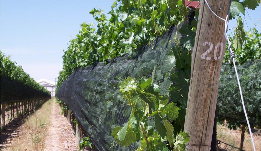 ドニャ パウラ エステート シャルドネ2009 白 アルゼンチンワイン通...  アルゼンチンの